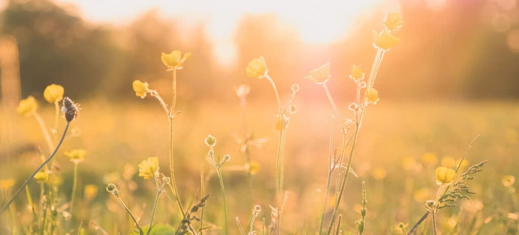 Thesaura Naturae Blog Cura Primavera Ildegarda Bingen
